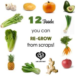 Food_Regrow from scraps